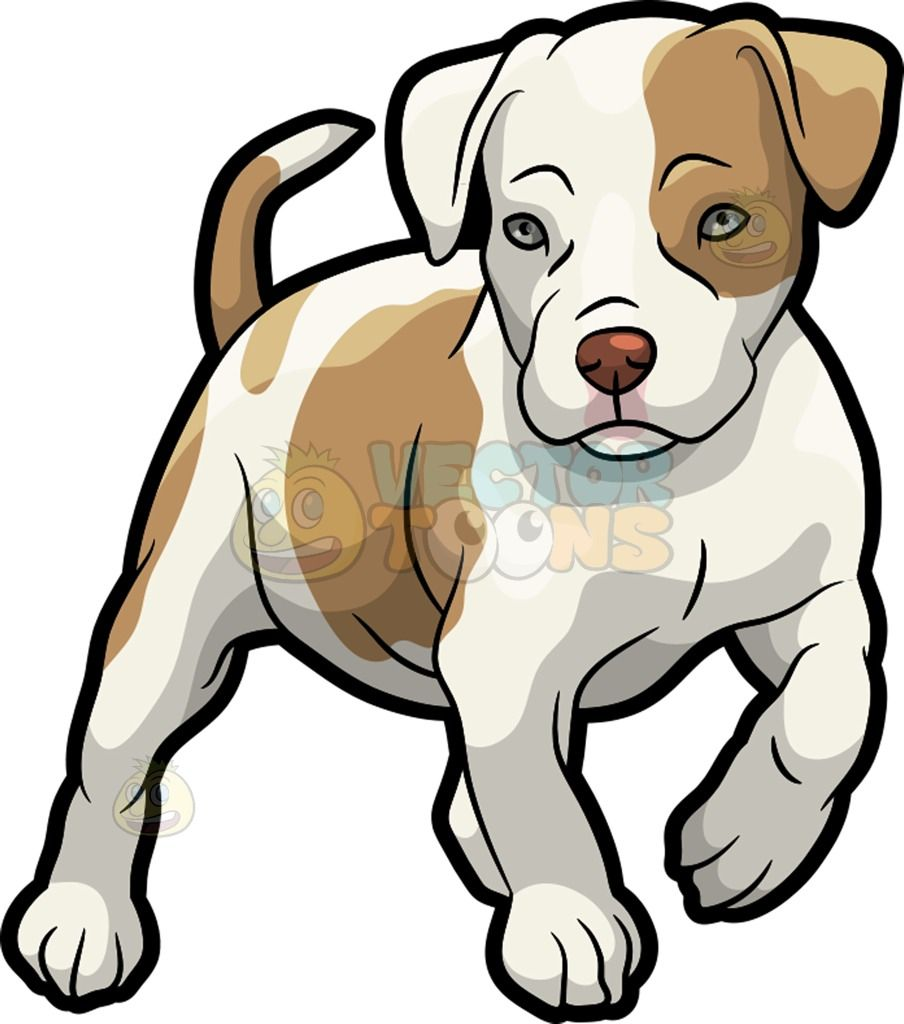 a pit bull puppy rh pinterest ie cute pitbull clipart pit bull terrier clipart