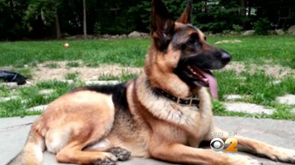 Cop Investigating Burglary Goes To Wrong House And Kills Dog