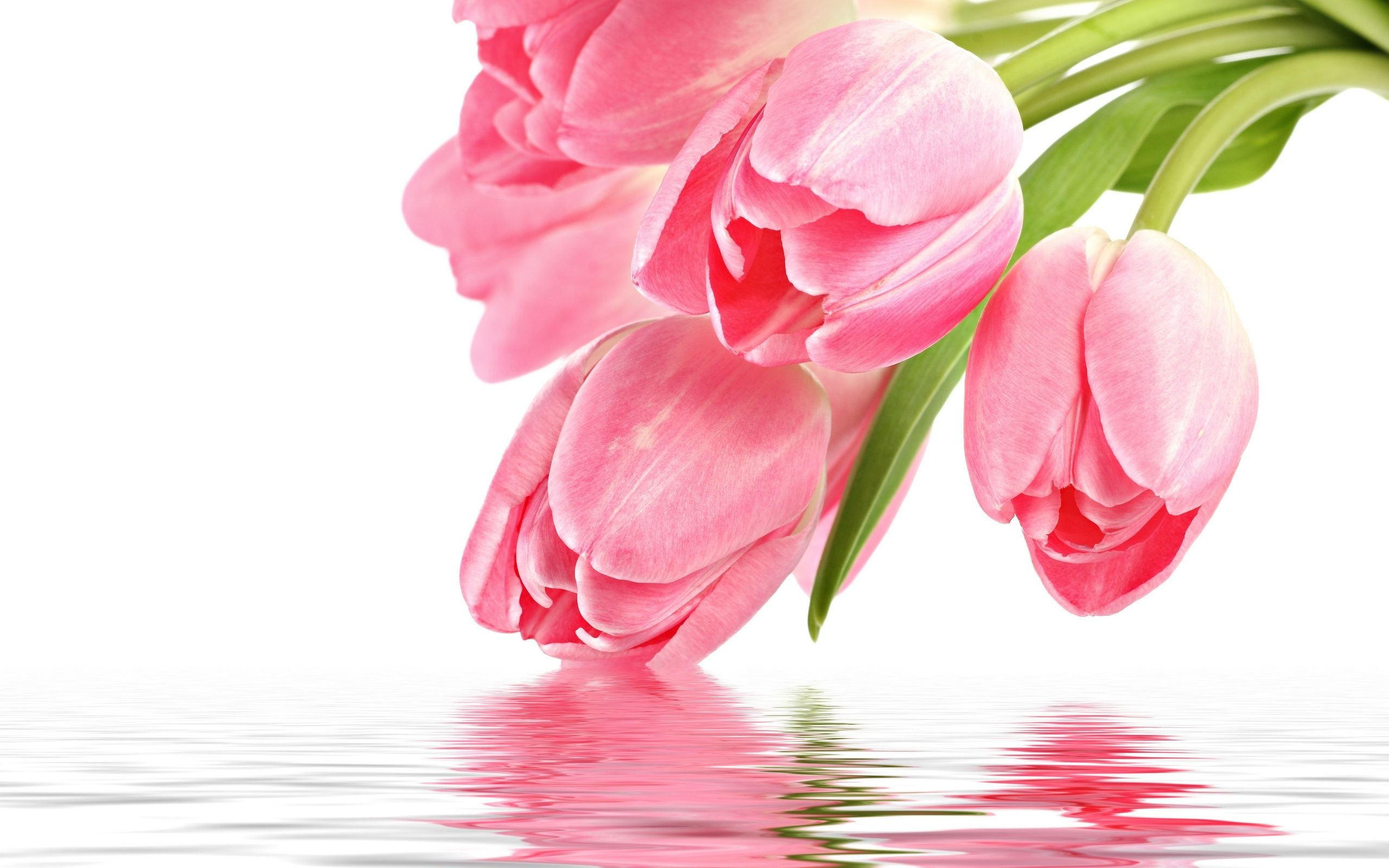 download wallpaper flowers, pink, tulip, pink tulips, reflection