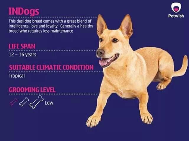 Pin By Sivarama Krishna On Police Dog Dog Breeds Police Dogs Breeds