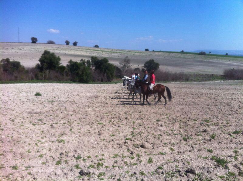 Alcantaraecuestre.com en Jerez de la frontera Andalucia Spain