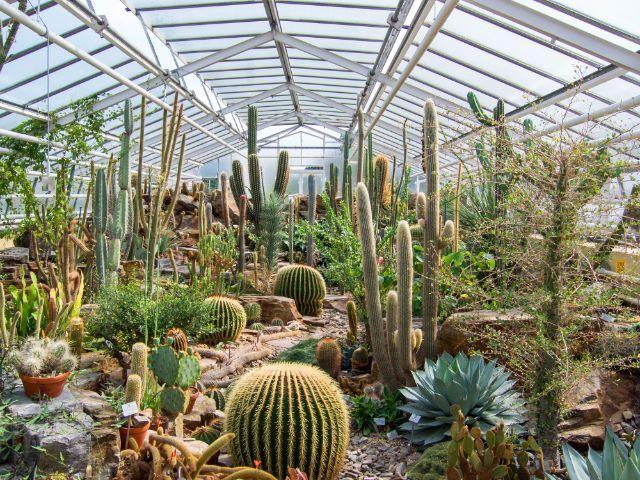 Botanical Garden Kakteen Im Glashaus Des Botanischen Garten München