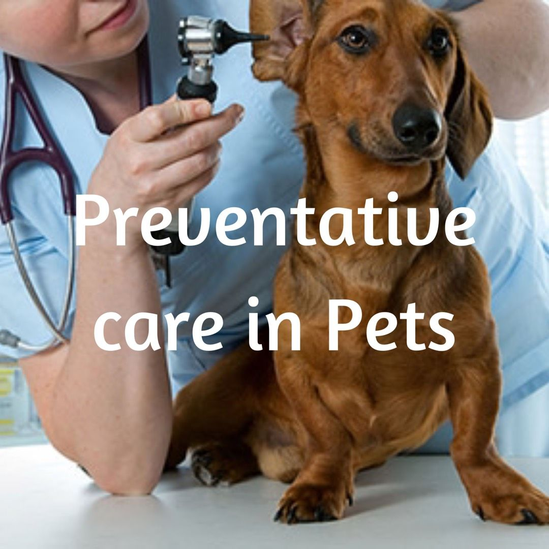 The Importance of Preventive Care Pet care, Pets, Health