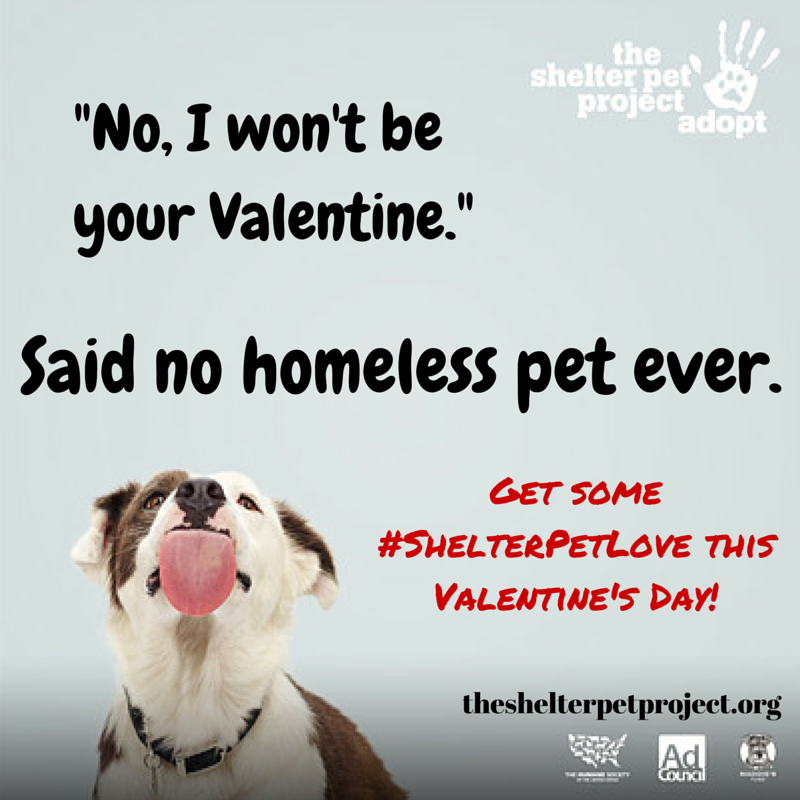 Pin On The Shelter Pet Project