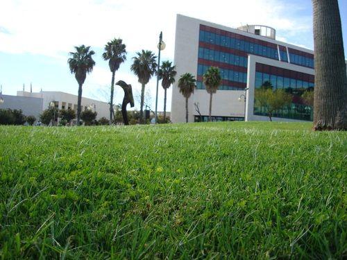 En los jardines de la Biblioteca del Campus de Guajara, en los días soleados