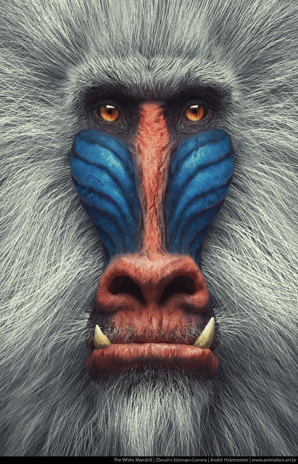 The White Mandrill   Primate Series, Andre Holzmeister is part of Wildlife animals - I am making a Series of Primate portraits