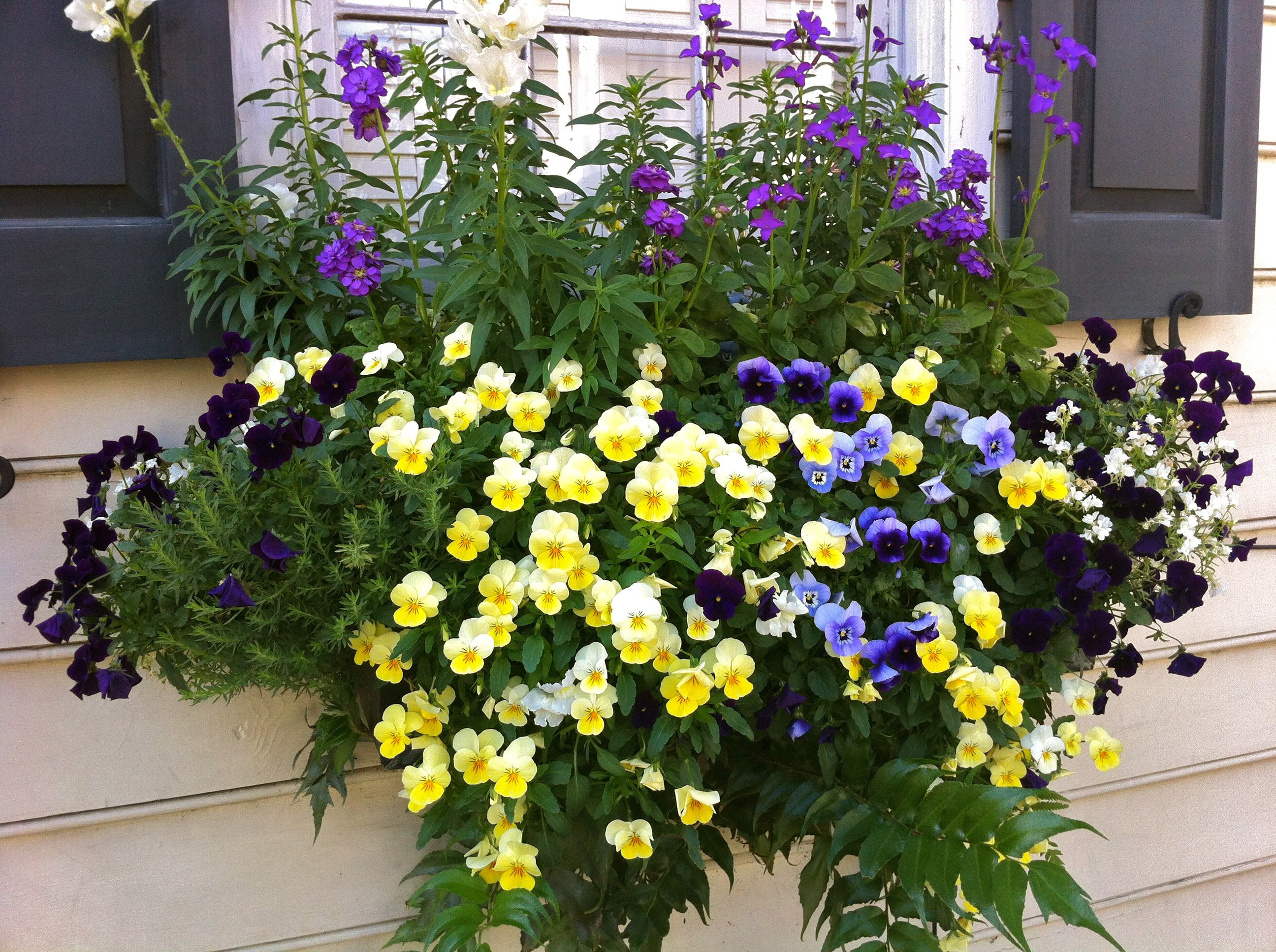 Viola rosemary holly fern and snapdragons are making a beautiful
