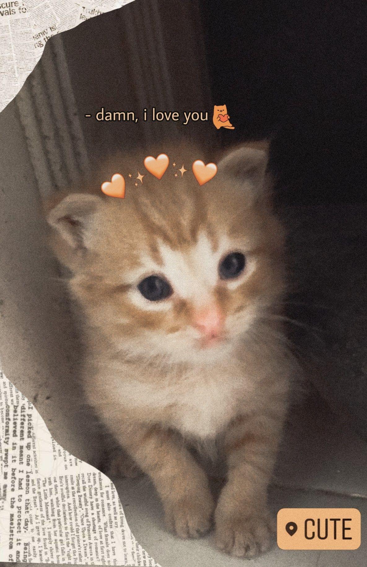 Pin Di Kitten