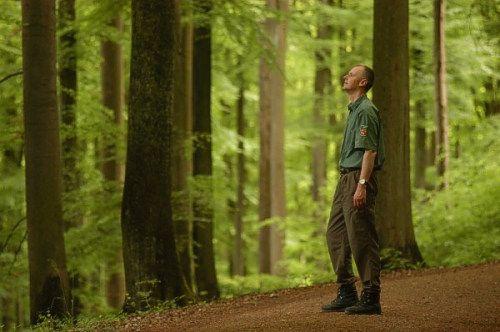 Forster Peter Wohlleben Im Buchenwald Tree Plants