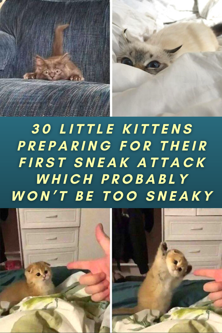 30 Little Kittens Preparing For Their First Sneak Attack Which Probably Won T Be Too Sneaky In 2020 Little Kittens Kittens Cutest Kittens