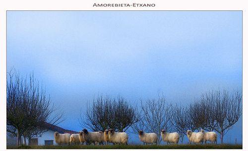 """Una mañana de domingo de NIEBLA y FRÍO.  Isela Molina: """"Vaaaaaa cordero a oveja, cordero a oveja va,  tu raza, tu credo y tu clan, es consejo y moraleja""""  (pero en idioma ovejero ehhhh -como en Babe el puerquito valiente-)."""