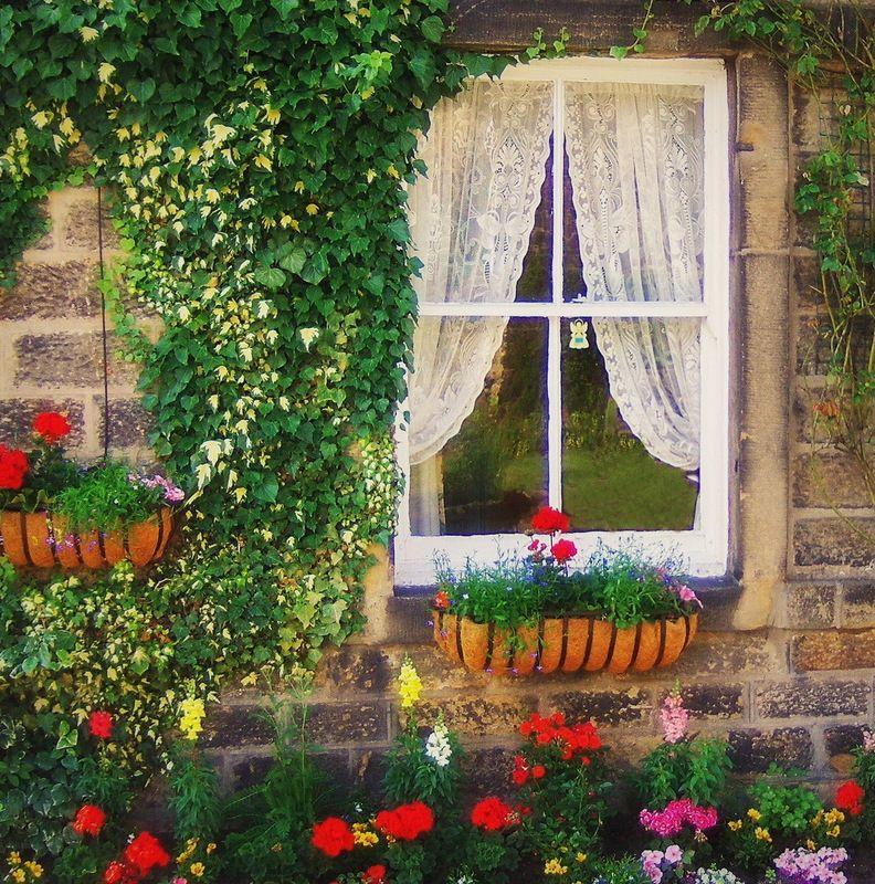 картинки окна с растениями большинство окружающих нас