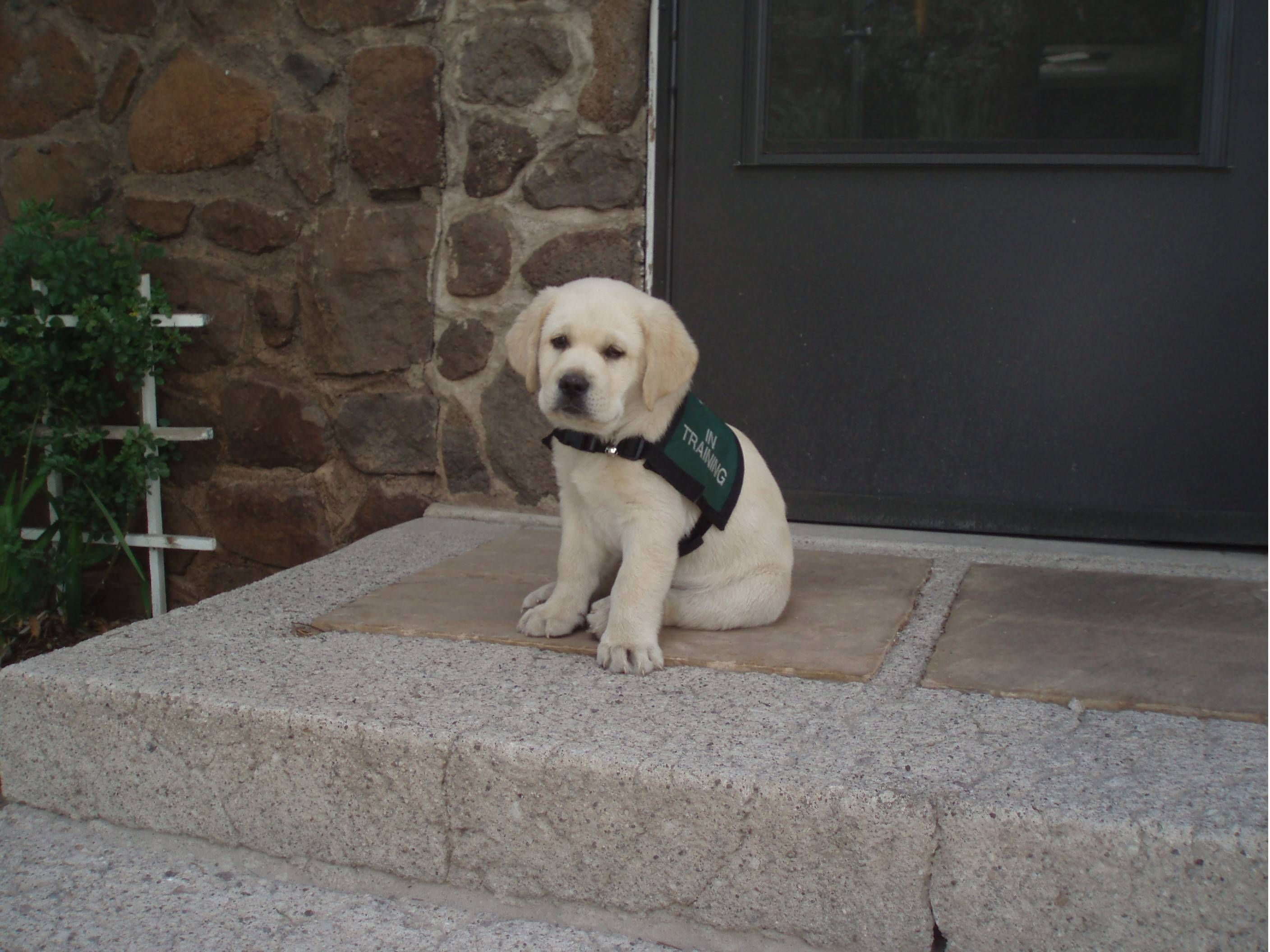 First day on the job puppies pinterest