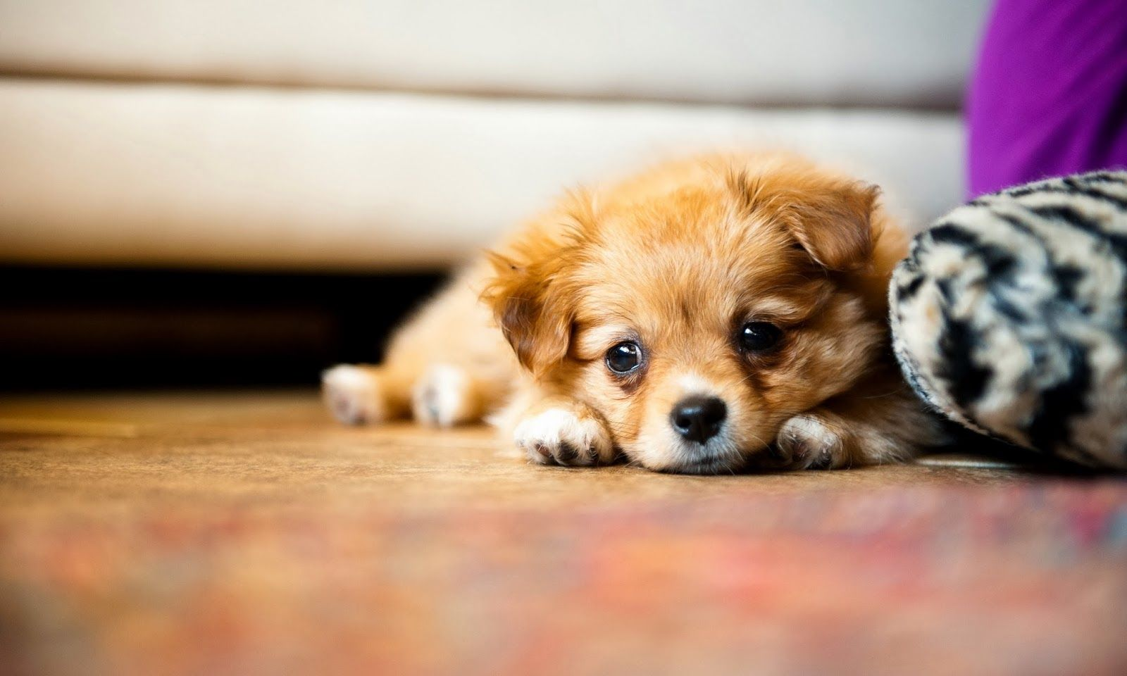 Puppy Photography 1080p Wallpapers 1 Jpg 1 600 960 Pixels Cute Puppy Wallpaper Cute Puppy Pictures Puppy Pictures