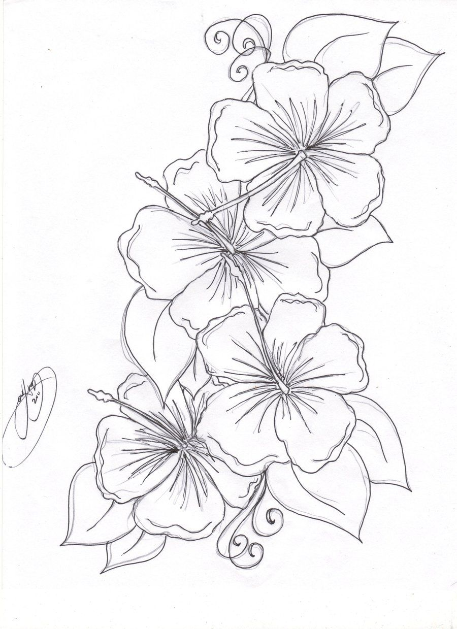 Hibiscus Flowers By Closet Case 808 Deviantart Com On Deviantart