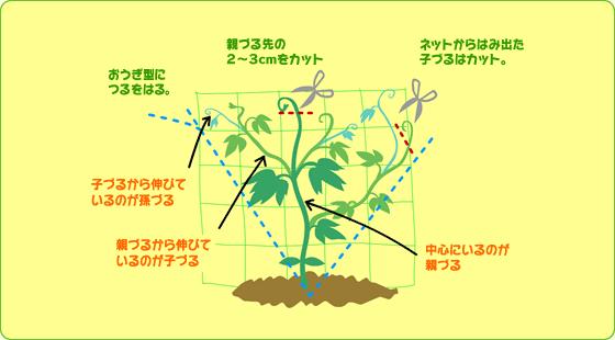 suumo 緑 の カーテン