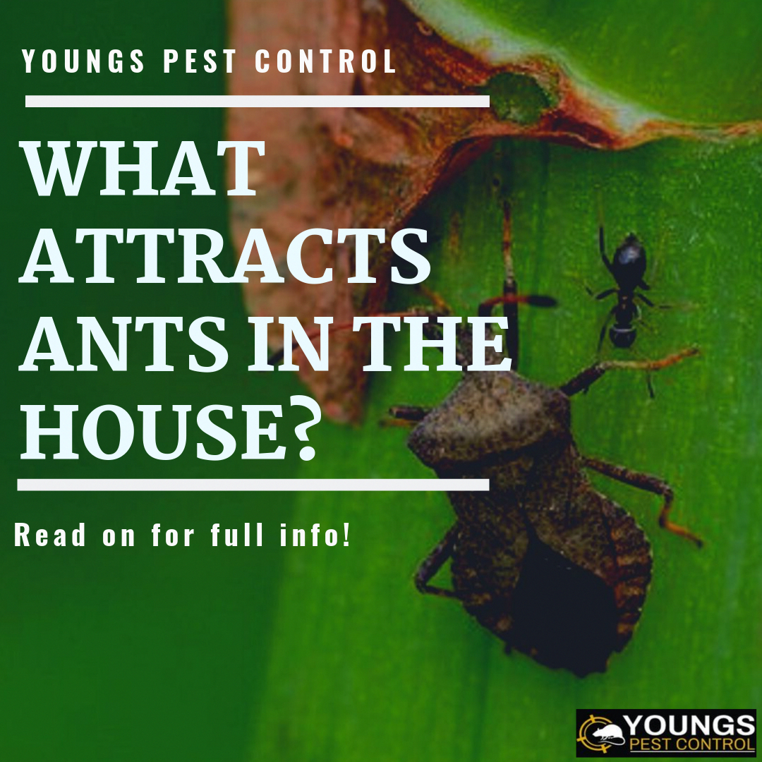 The Basics Of Pest Control In 2020 Pest Control Ant Infestation Pests