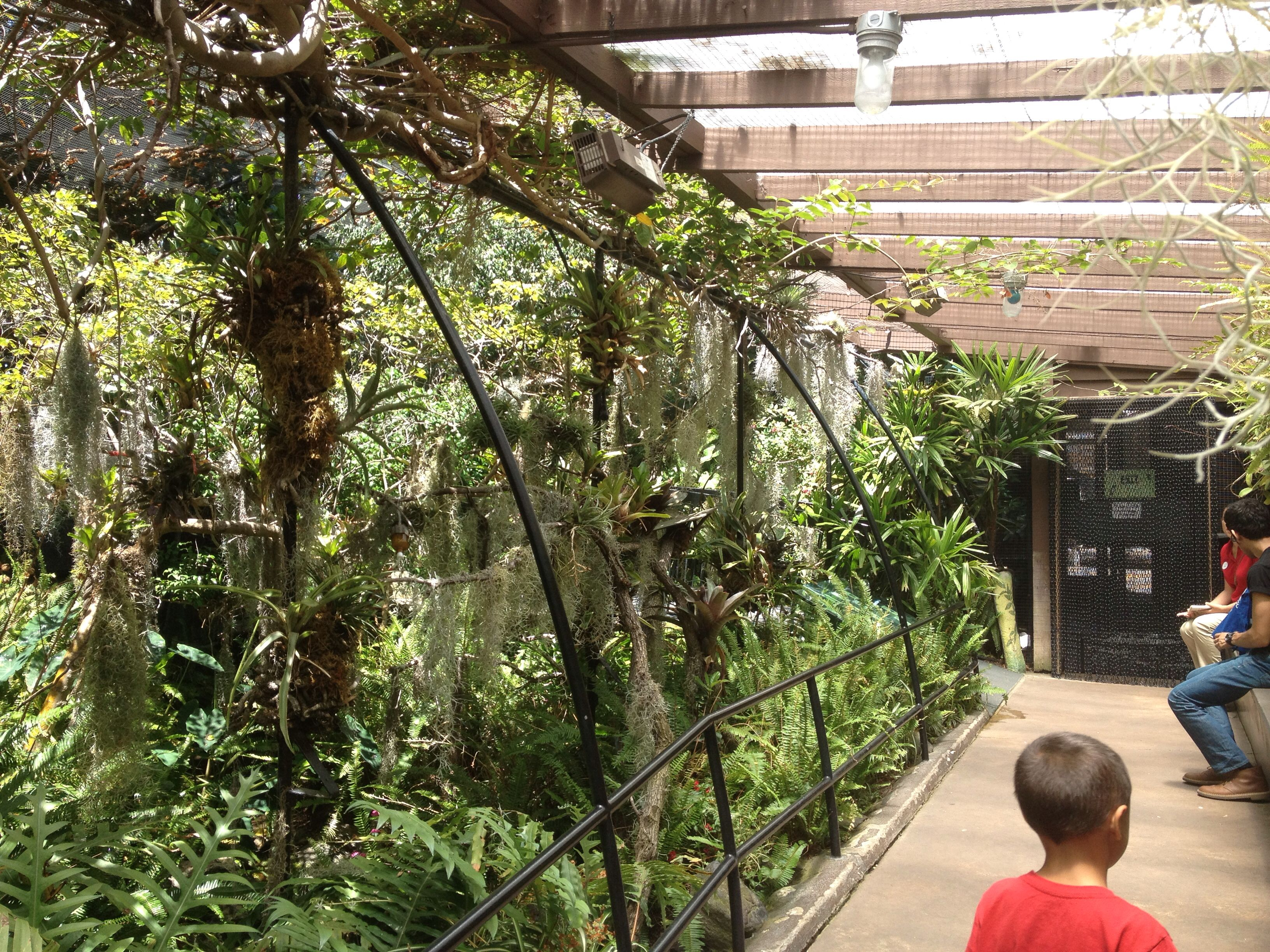 Been Here Done This I Was A Member For Many Years When I Lived In So Cal San Diego Zoo Inside A Tropical Aviary With Hummingbirds