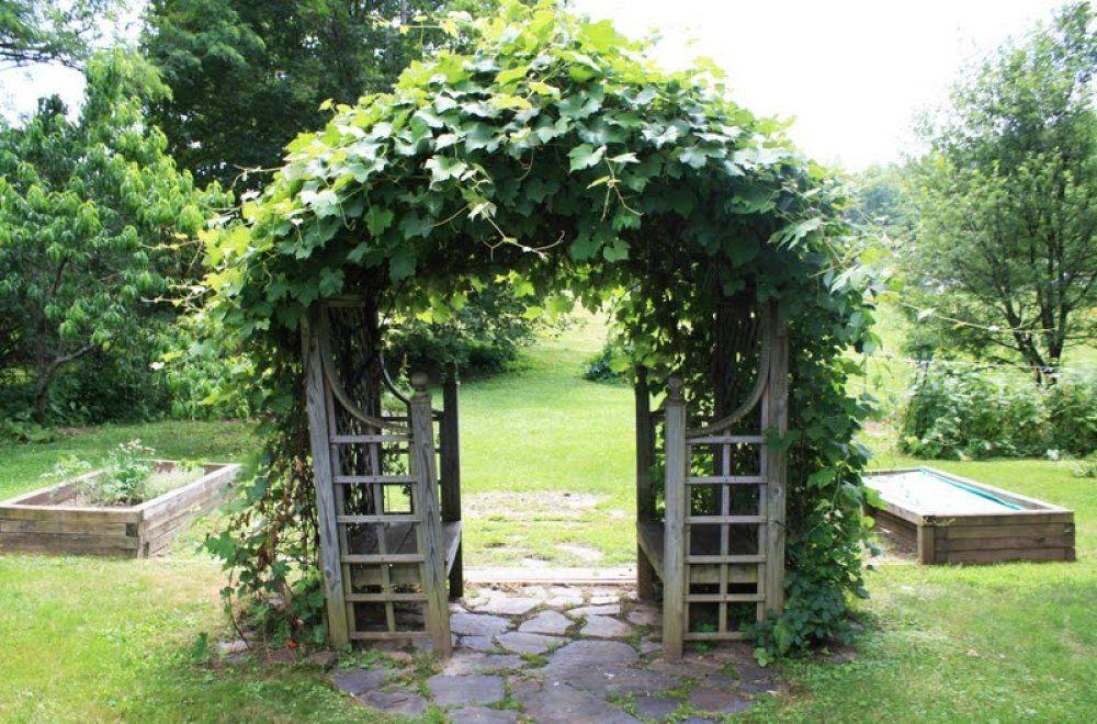 Amazing Grape Vine Trellis Ideas Part - 8: Hereu0027s A Cool Backyard Grapevine Trellis.