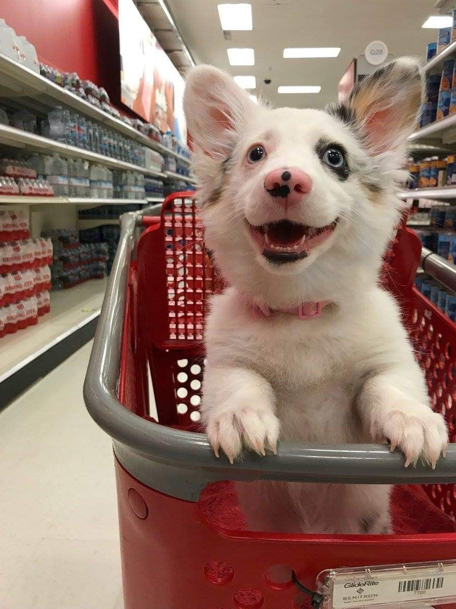 The Real Life Target Dog In Target Lol Almost Happy Dogs