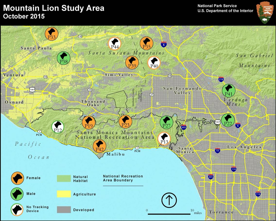 Santa Monica Mts. Approx mountain lion loc\'s (2 died of ...