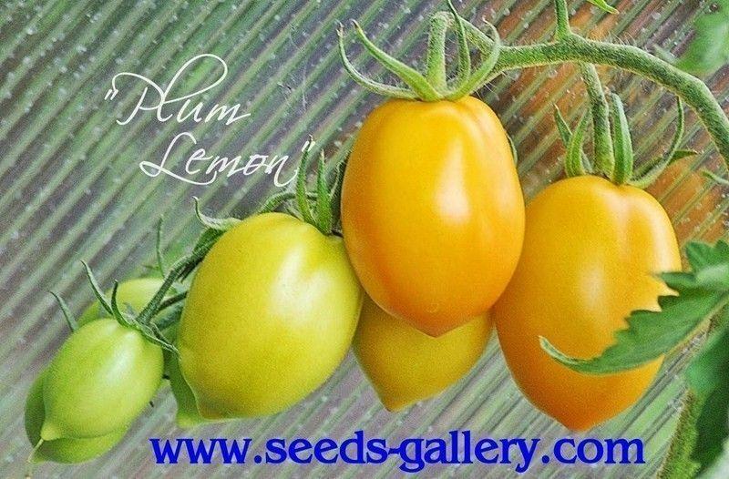 Tomate Plum Lemon 20 Samen