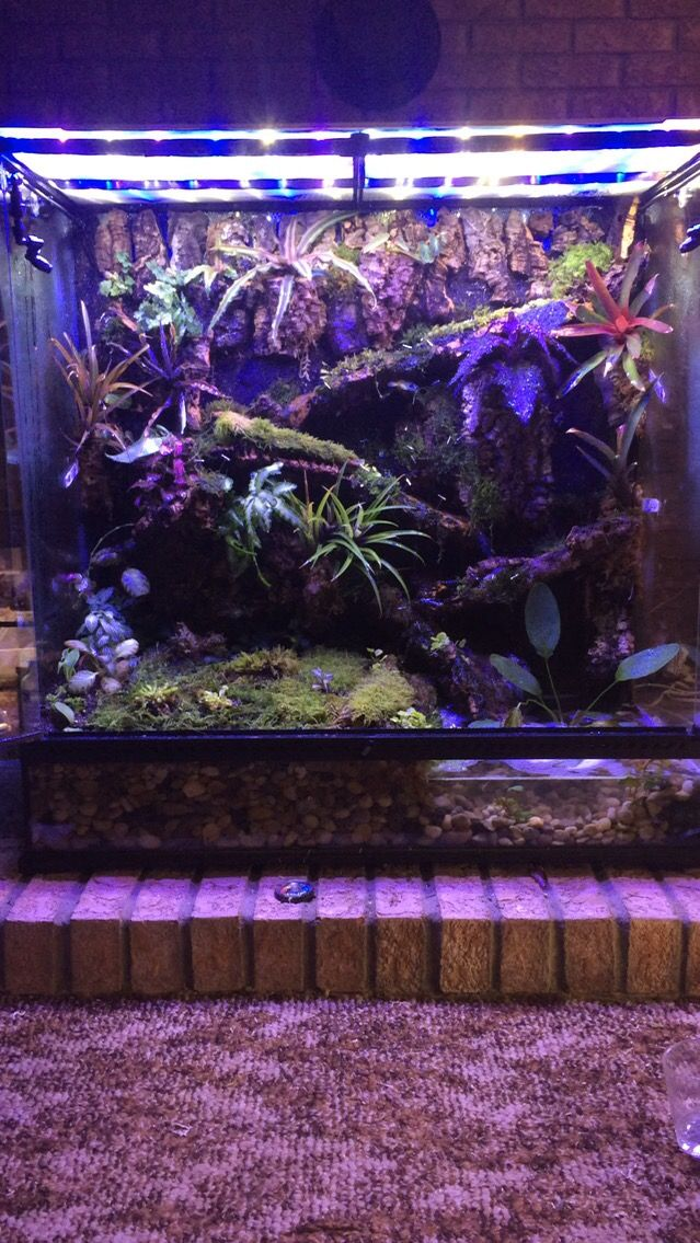 Exo Terra Large X Tall Paludarium With Corkbark Background And
