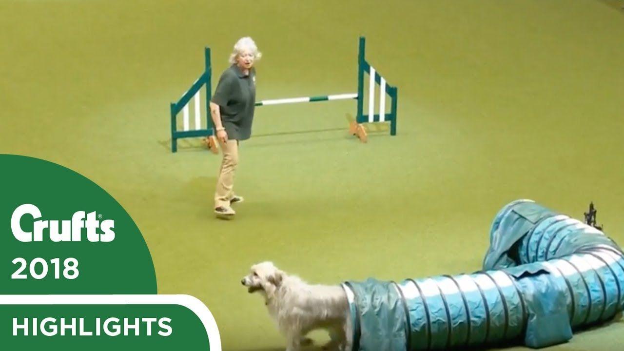 Kratu The Rescue Dog Having Fun In The Rescue Dog Agility Crufts