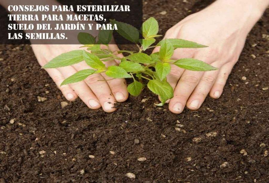 consejos para esterilizar tierra para macetas, suelo del jardín y