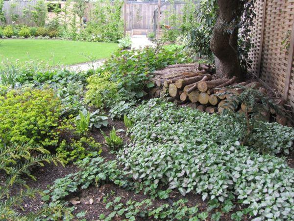 Bodendecker-im-Garten-landschaftsbau-herbst-bäume-zaun-umgebung - garten und landschaftsbau bilder
