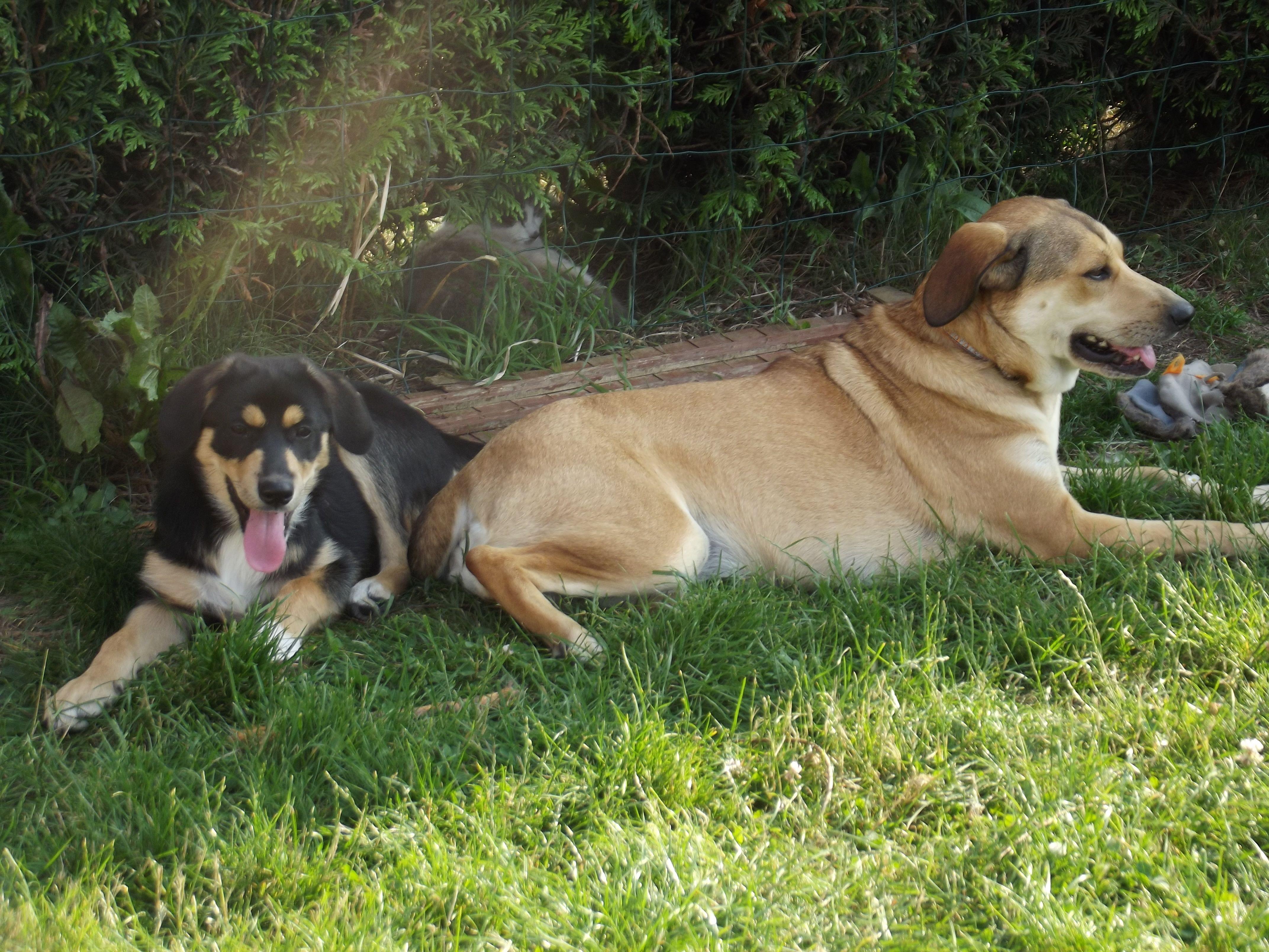 Chanel et Bella