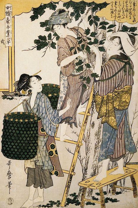 """Women picking mulberry leaves, from the series Silkworm Culture: The Handiwork of Women, by Kitagawa Utamaro. Published by Tsuruya Kiemon, c. 1798-1800. "" Text and images via Gina Collia-Suzuki."