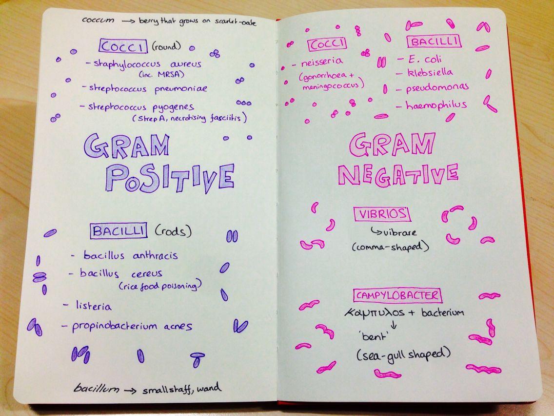 Microbiology For Medics Basic Gram Stains