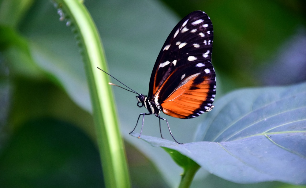Free Image On Pixabay Golden Passion Flower Butterfly Butterfly Facts For Kids Types Of Butterflies Butterfly Facts