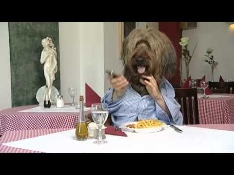 Hund Isst Ein Schnitzel Youtube Hund Essen Hunde