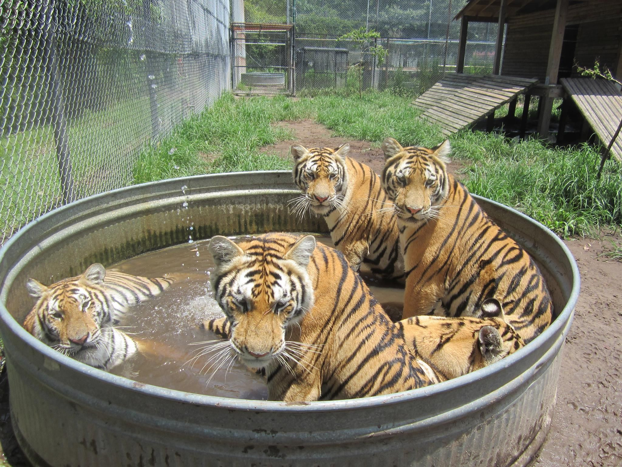 Catty Shack Ranch Wildlife Sanctuary Wildlife Like Animals