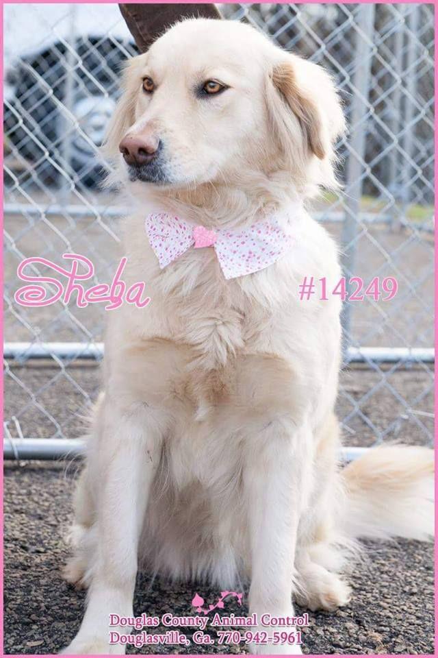 Douglas County Animal Shelter Ga Douglasville Ga 770 942 5961