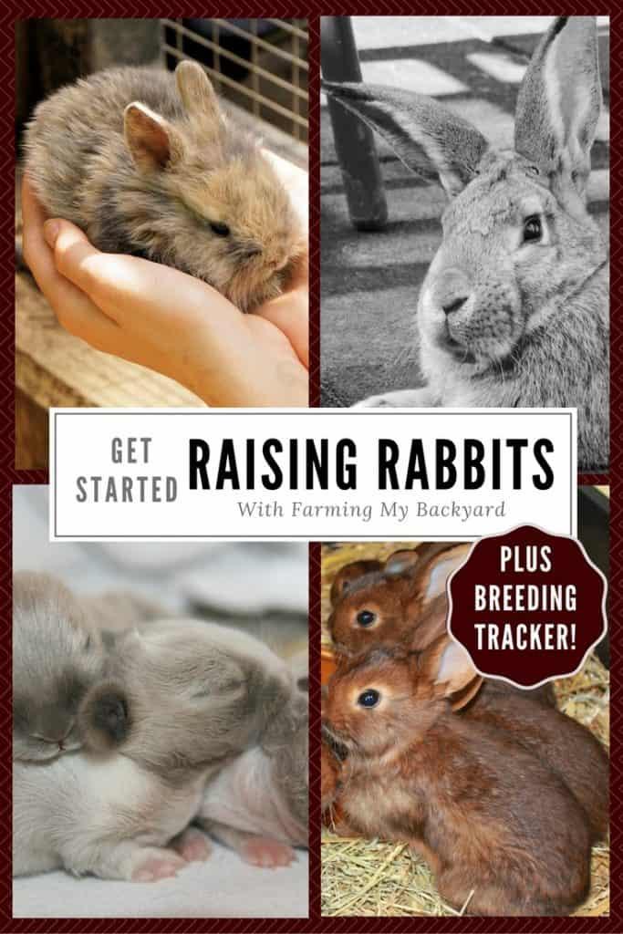 Raising Meat Rabbits - Farming My Backyard in 2020 ...