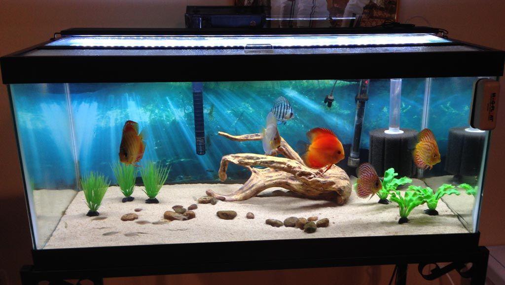 30 gallon aquarium fish suggestions aquarium ideas for Aquarium decoration kits