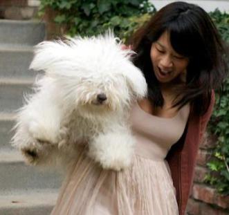 Zuckerbergs Play 'Wag The Dog' To Distract FB's Stock Plummeting? ... #FB #IPO #dogs ... PetsLady.com | via @roncallari