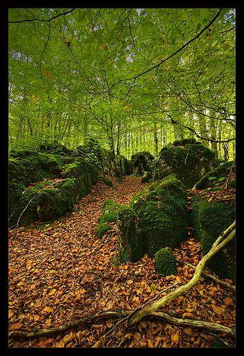 """Parque Natural Urbasa Andía""""  Bosque de Hayedos y Musgo  Navarra  Spain"""