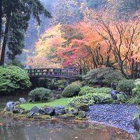 Autumn Japanese Garden With Maples