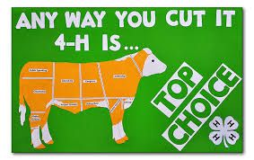 Image result for 4 h posters ideas | 4h folder | 4 h, 4 h
