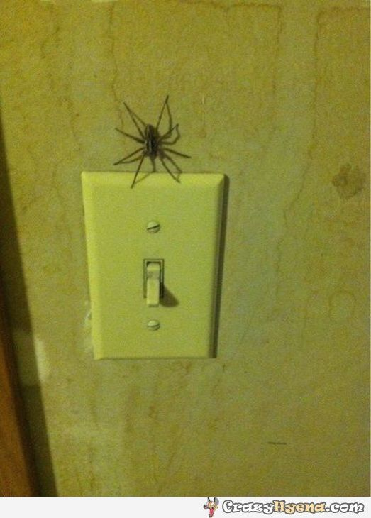 A funny picture of a spider that has crawled to the lights switch and scaring everyone who tries to turn the lights off.