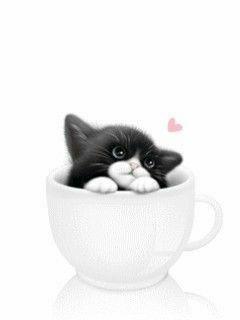 Such a pretty baby #kittensideas