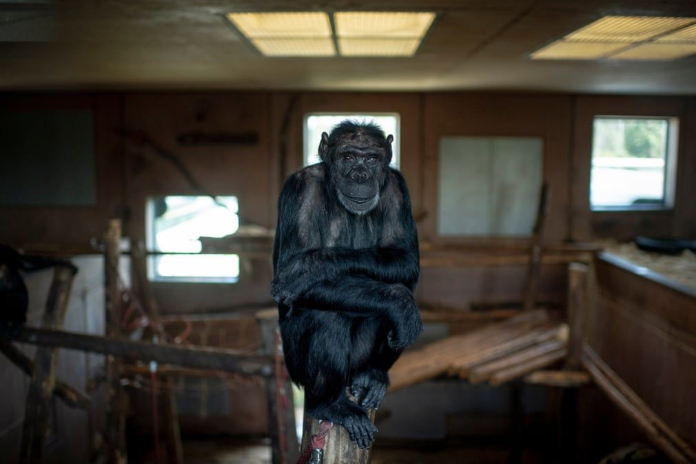 The 20 Photographs Of The Week Primates Animals Chimpanzee