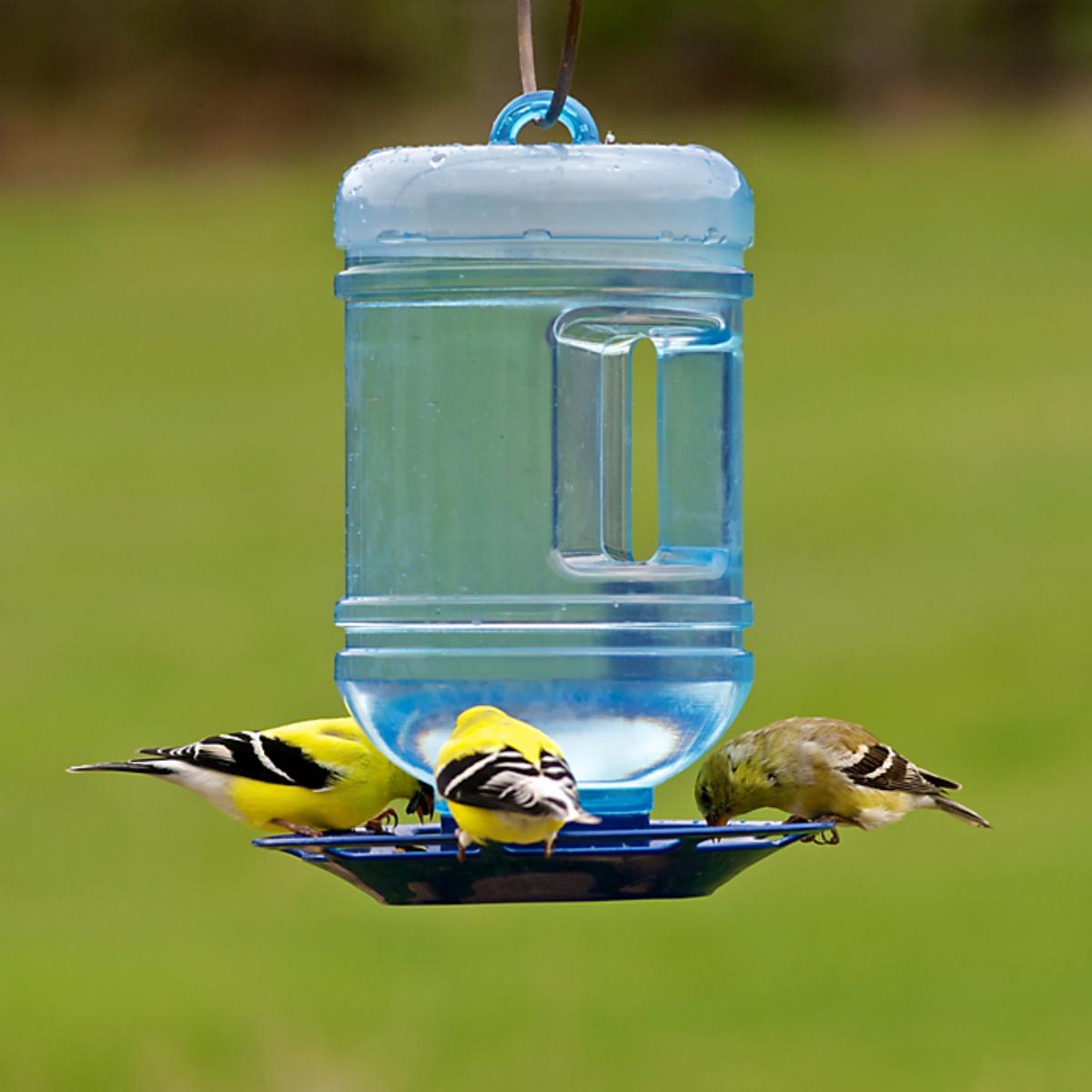 Perky-Pet 780 Water Cooler Bird Waterer