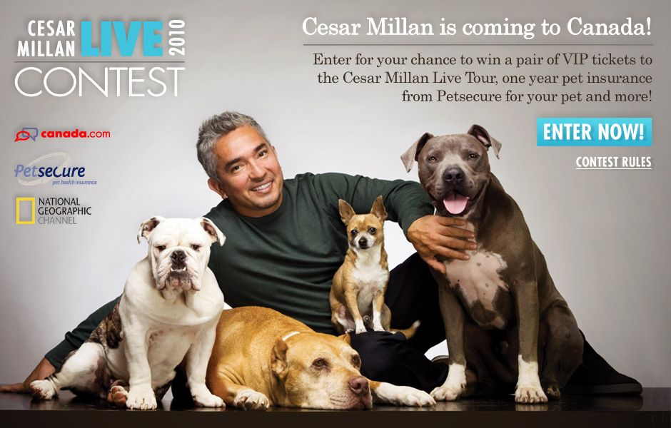 I Would Luv To Meet And Learn From Cesar Think I Ve Seen Most