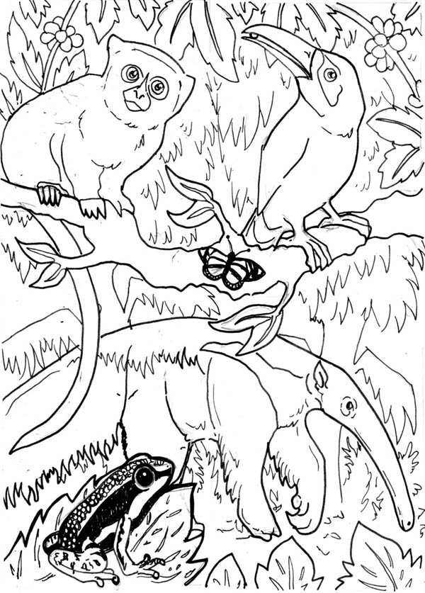 Exoctic Animals In The Forest Coloring Page Coloring Sky Coloring Pages Animal Coloring Pages Amazon Coloring Books