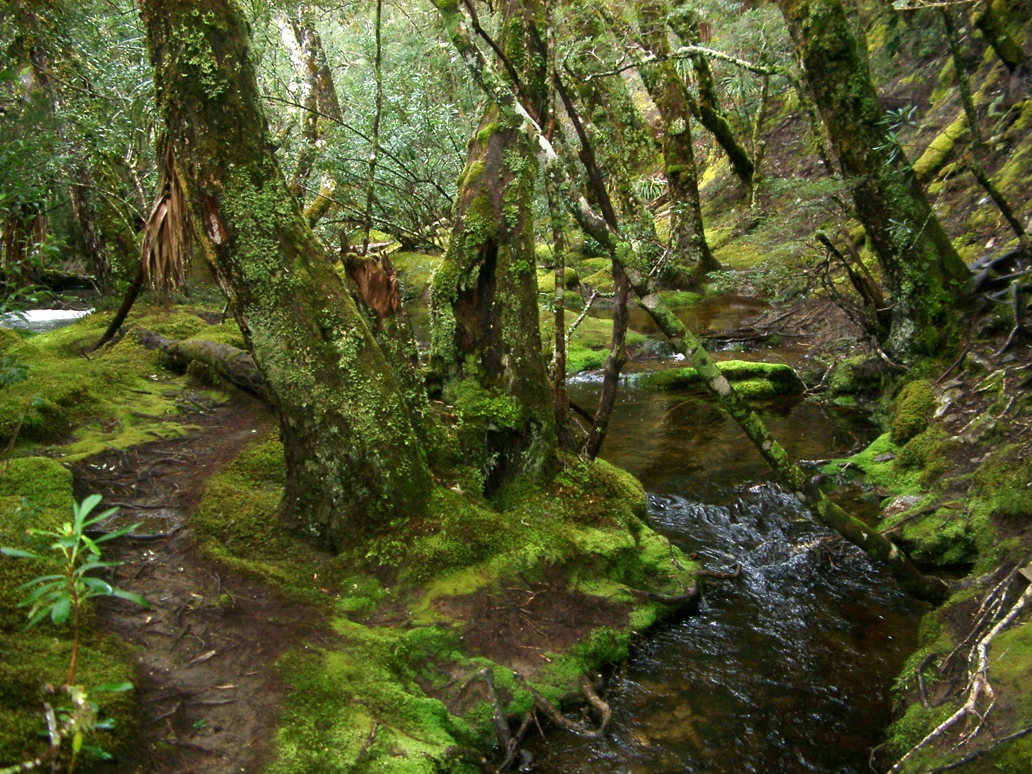 Misty Green Forest Nature River Beautiful 1ziw: How Beautiful! I Expect To See Gandolf Or Frodo Walk Out
